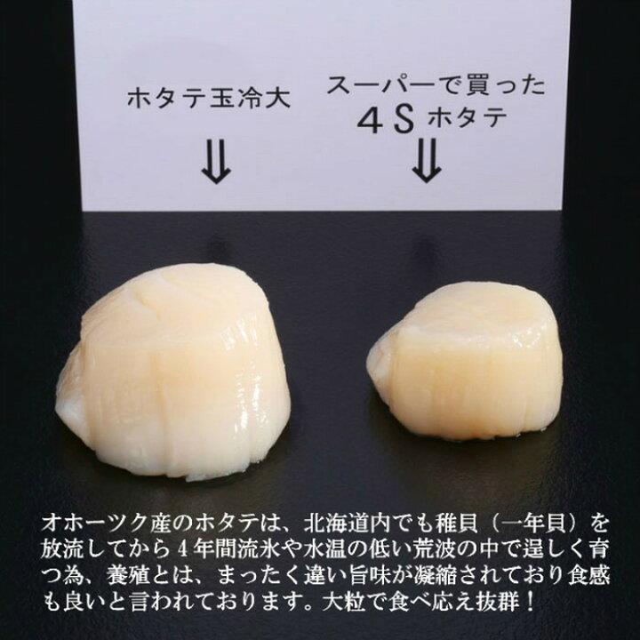 北海道紋別市 オホーツク産ホタテ 粒の大きさ比較
